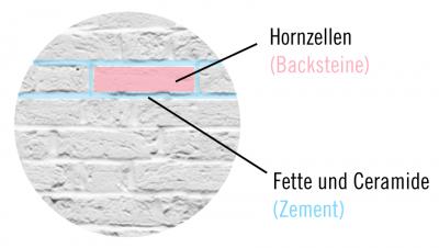 Hautbarriere Model aus Backsteinen