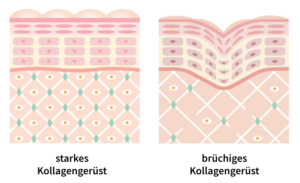 Kollagen Haut Falten