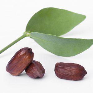 Jojoba Blätter und Früchte