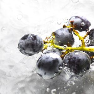 Weintraube Resveratrol