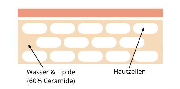 Ceramide in der Hornschicht